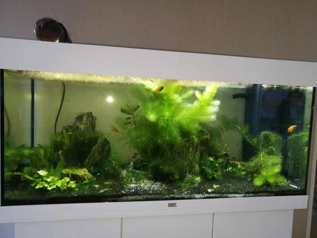 Q° multiples, algues, faible croissance plantes,osmoseur ... 210