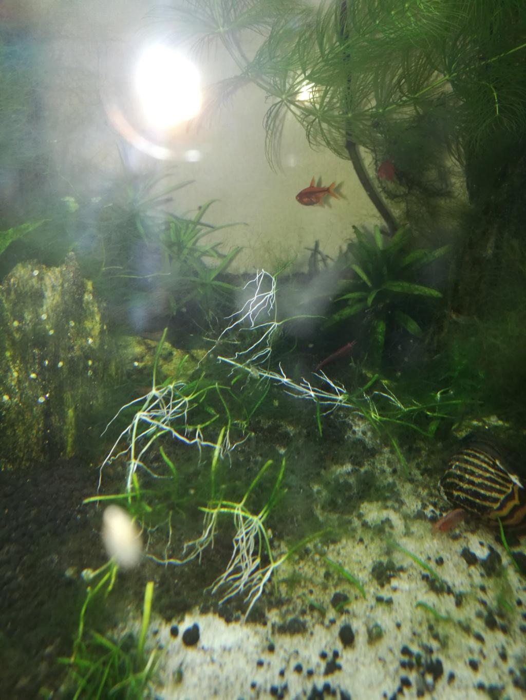 Q° multiples, algues, faible croissance plantes,osmoseur ... 610