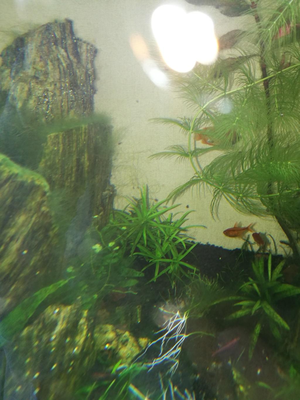 Q° multiples, algues, faible croissance plantes,osmoseur ... 710