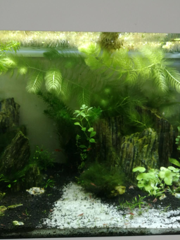 Q° multiples, algues, faible croissance plantes,osmoseur ... Img_2025