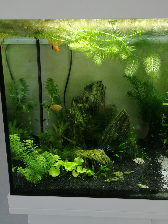 Q° multiples, algues, faible croissance plantes,osmoseur ... Img_2026