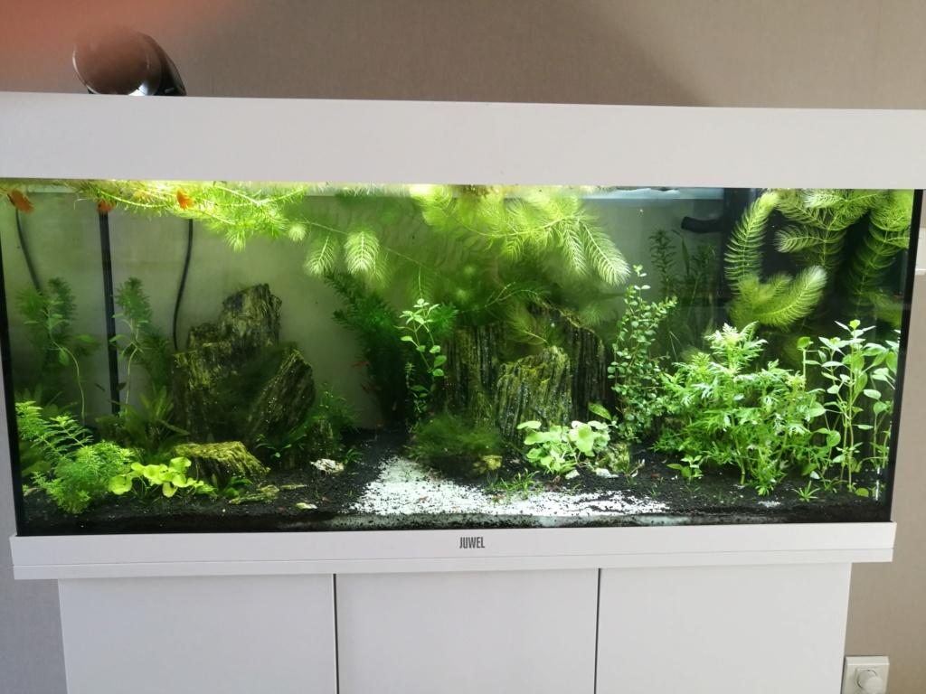 Q° multiples, algues, faible croissance plantes,osmoseur ... Img_2027