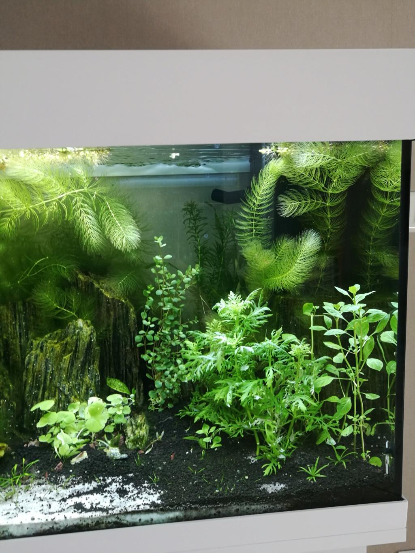 Q° multiples, algues, faible croissance plantes,osmoseur ... Img_2028