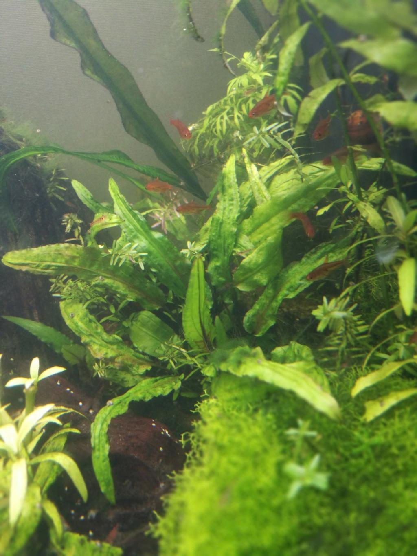 Algues filamenteuses, pinceau, plantes qui ne poussent plus. Img_2030