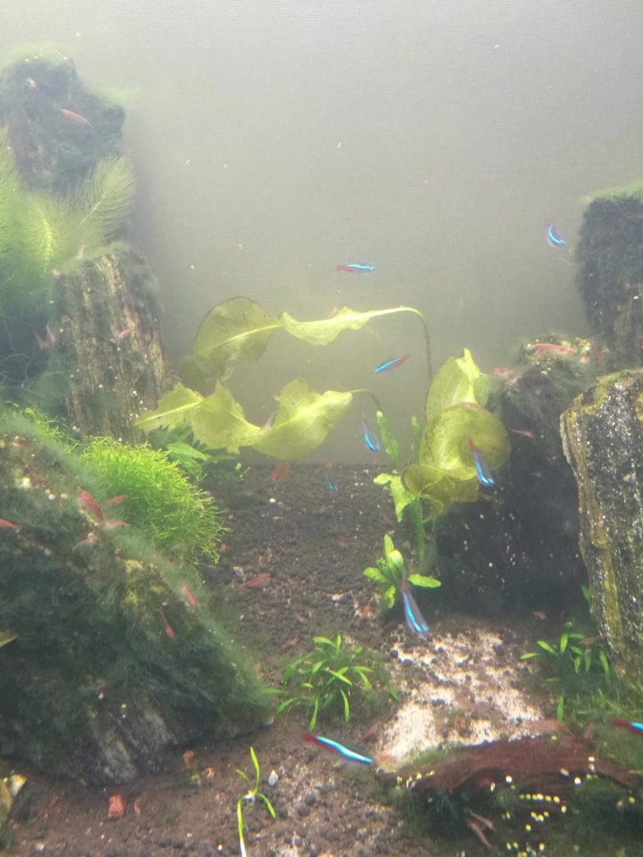 Algues filamenteuses, pinceau, plantes qui ne poussent plus. Img_2033