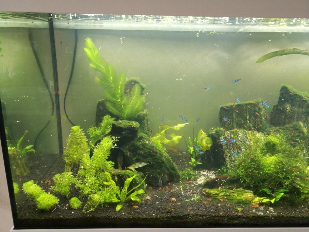 Algues filamenteuses, pinceau, plantes qui ne poussent plus. Img_2035