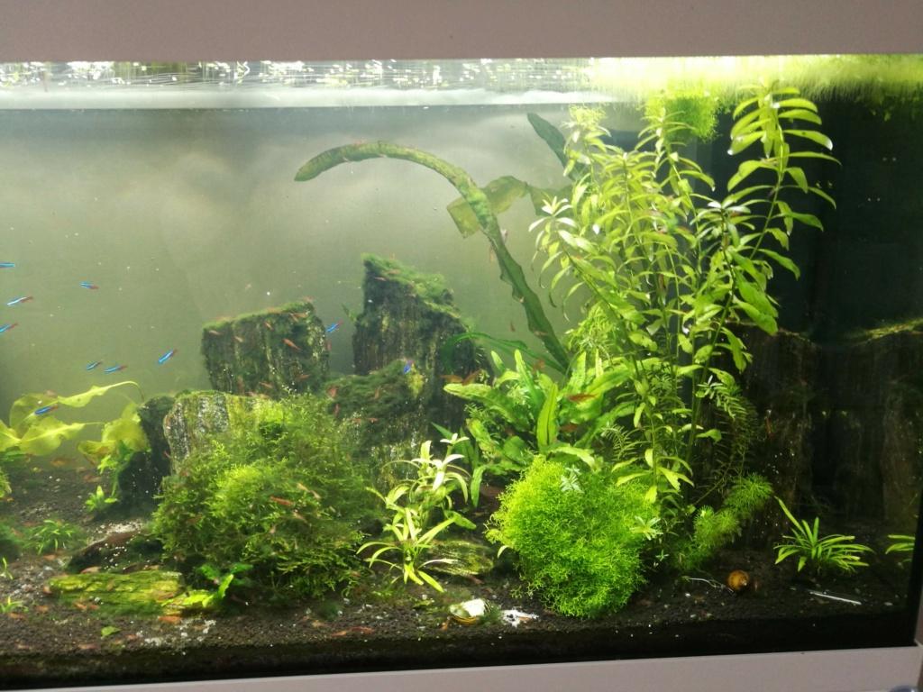Algues filamenteuses, pinceau, plantes qui ne poussent plus. Img_2036