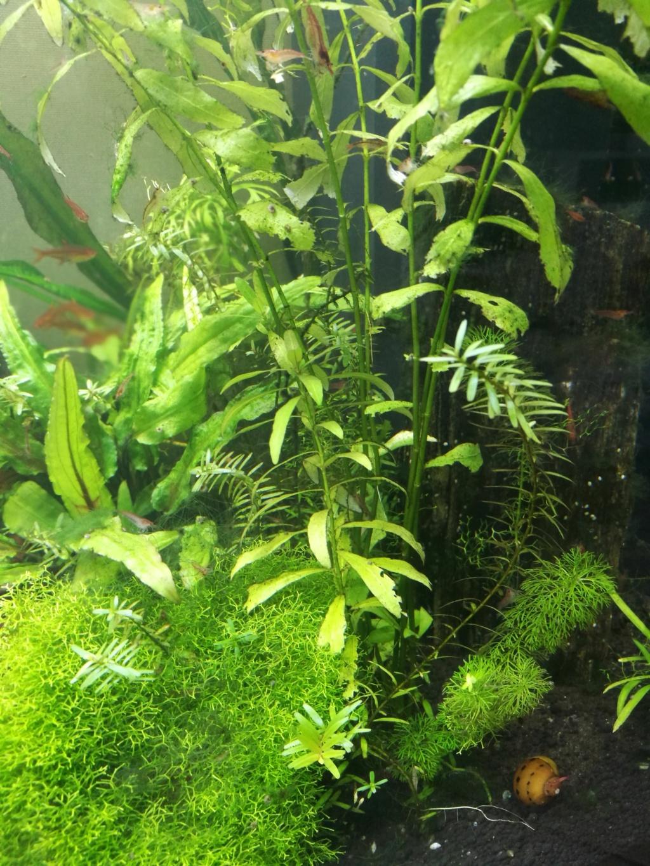 Algues filamenteuses, pinceau, plantes qui ne poussent plus. Img_2043