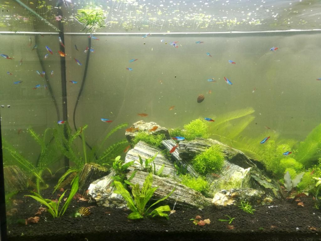 Algues filamenteuses, pinceau, plantes qui ne poussent plus. Img_2046