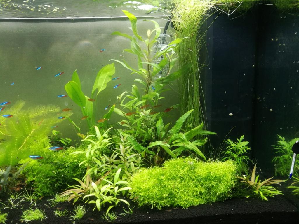 Algues filamenteuses, pinceau, plantes qui ne poussent plus. Img_2050