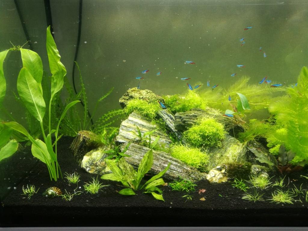 Algues filamenteuses, pinceau, plantes qui ne poussent plus. Img_2051