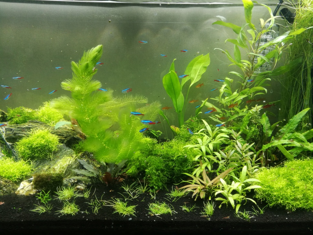 Algues filamenteuses, pinceau, plantes qui ne poussent plus. Img_2052