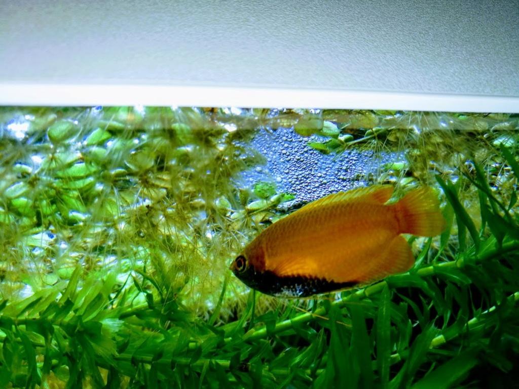 Q° multiples, algues, faible croissance plantes,osmoseur ... Poisso10