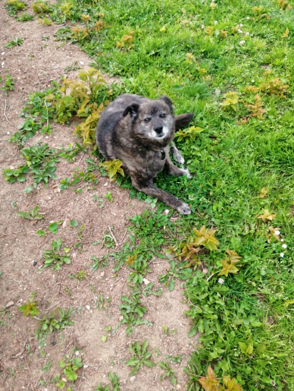 MIGNONNE - femelle, croisée, née environ août 2012, de petite taille - REMEMBER ME LAND - En FA chez Armelle (94) - Page 5 Mignon10