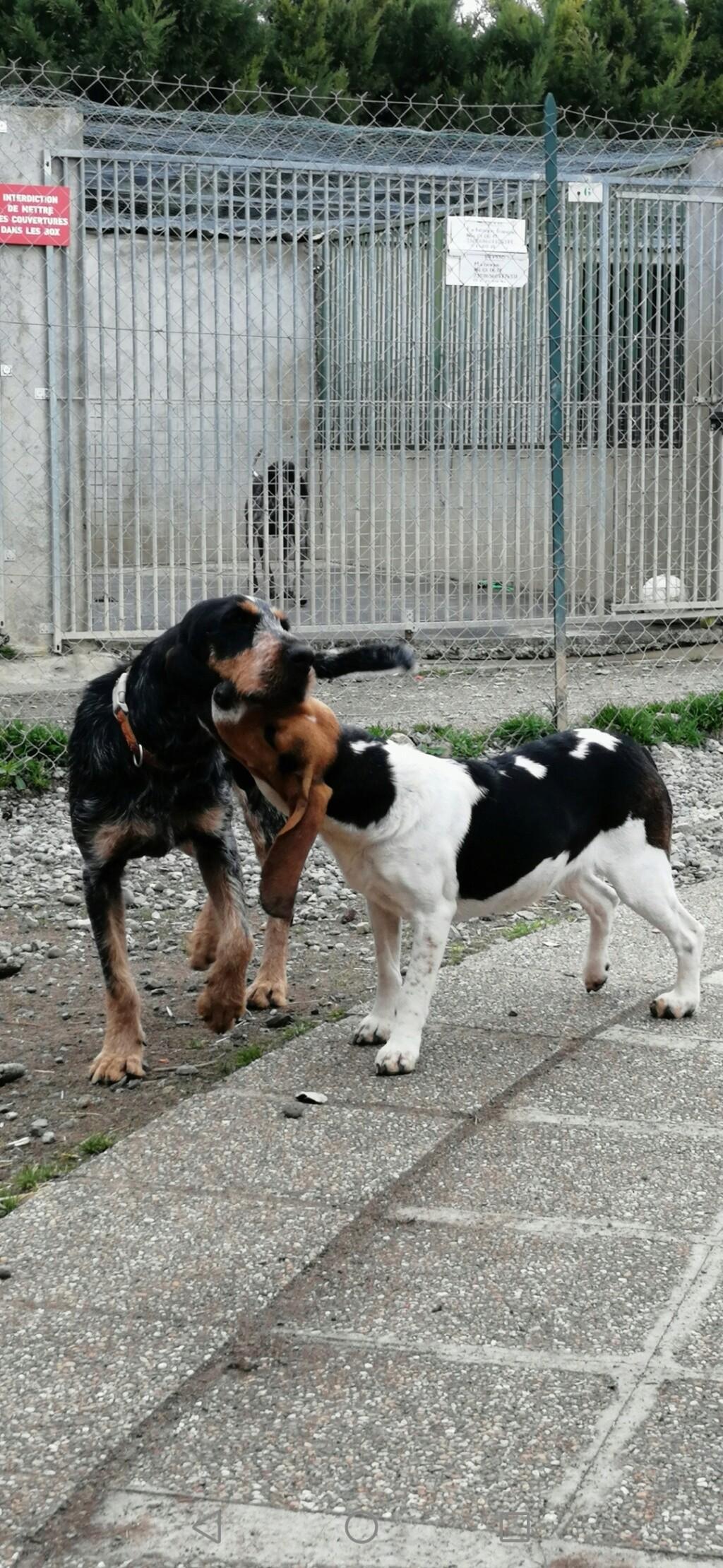 REINE (femelle croisée beagle)  Screen12