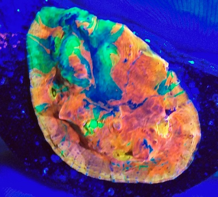 Stock coral masuk PACIFIC REEF 2 January 2020 1_1010