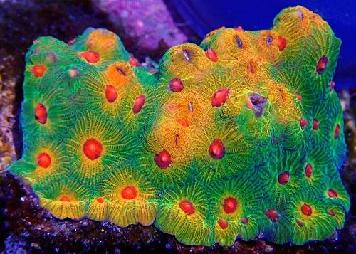 Stock coral masuk PACIFIC REEF 3 January 2020 1_111