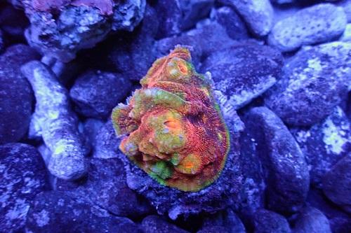 Stock coral masuk PACIFIC REEF 3 January 2020 1_711