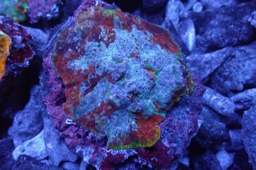 Stock coral masuk PACIFIC REEF 3 January 2020 1_811