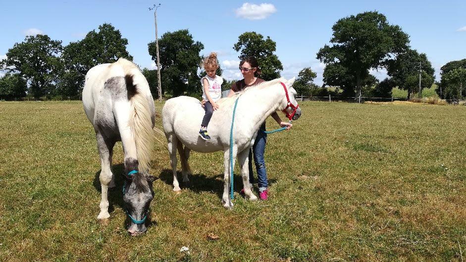 FRIPON - Welsh Pony né en 1993 - adopté en juillet 2015 par Claire Unname11