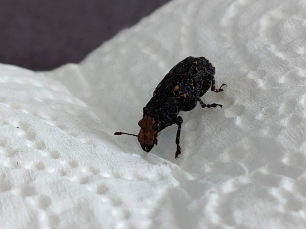 Identification insecte Image010