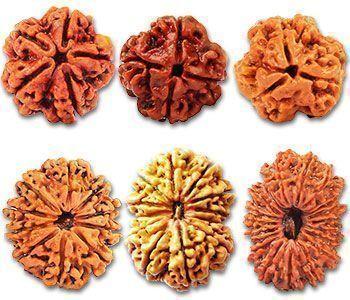 El rudráksha, la semilla divina B9db1510