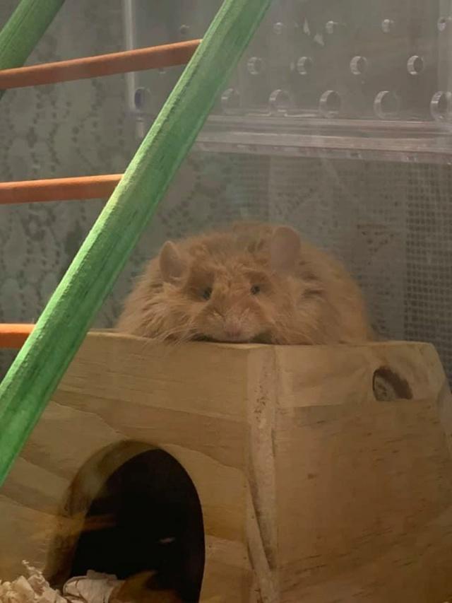 Hello Everyone! :) Bilbo11