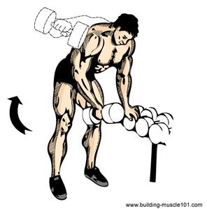 L'élévation latérale des bras avec haltères Single10