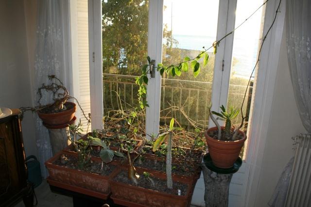 Les plantes que j'ai maintenant en intérieur, dans ma maison Succul10
