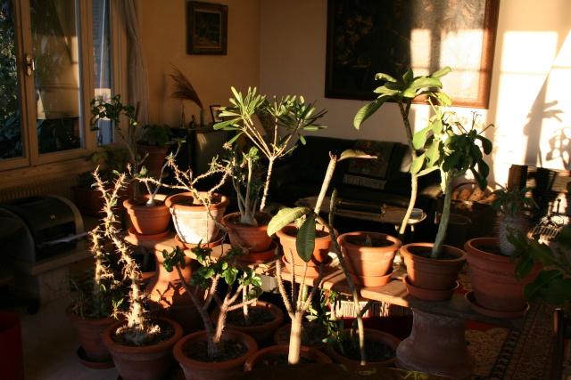 Les plantes que j'ai maintenant en intérieur, dans ma maison Succul11
