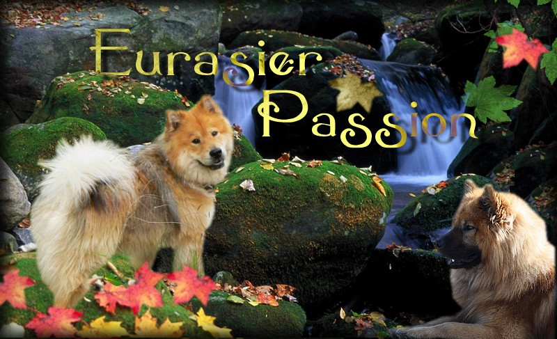 Eurasiers passions Bannie10
