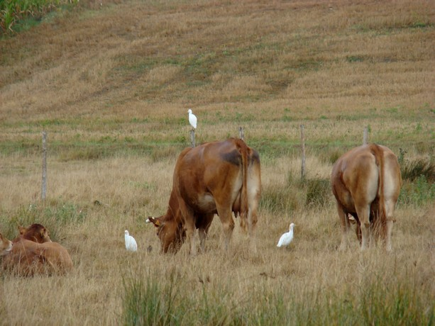 mes photos d'animaux de l'été Dsc03912