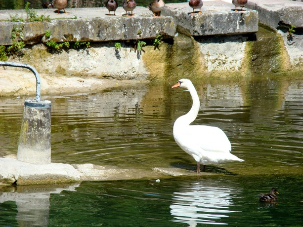 mes photos d'animaux de l'été Dsc04036