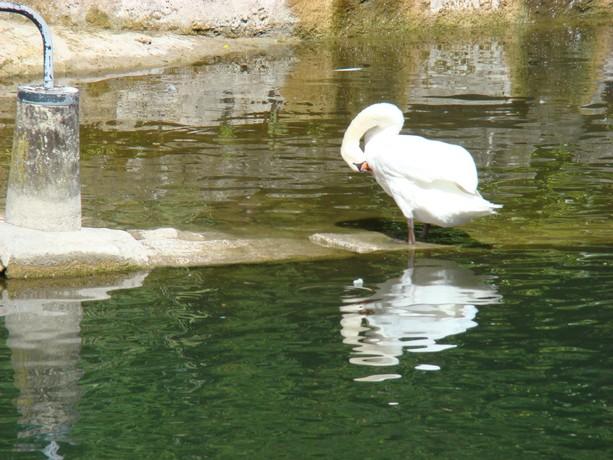 mes photos d'animaux de l'été Dsc04037
