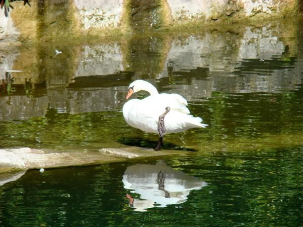mes photos d'animaux de l'été Dsc04038