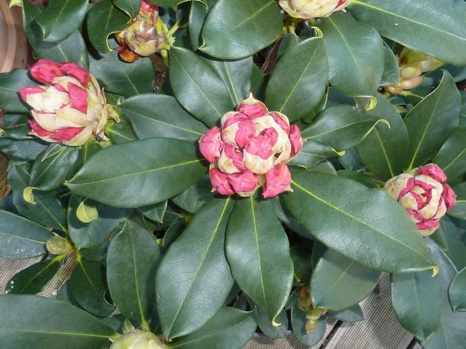 photos fleurs de marie (album 2) P1030910