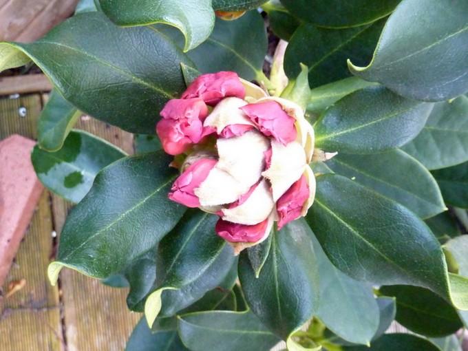 photos fleurs de marie (album 2) P1030911