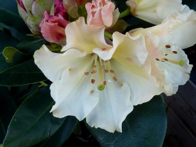 photos fleurs de marie (album 2) P1030913