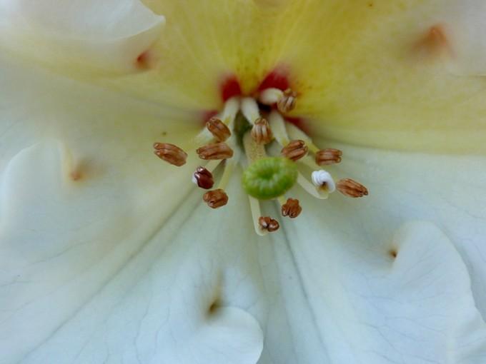 photos fleurs de marie (album 2) P1030915