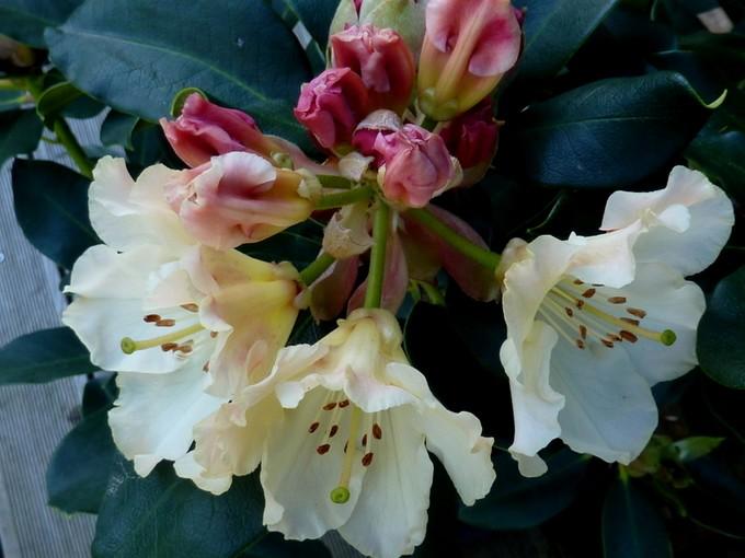 photos fleurs de marie (album 2) P1030916