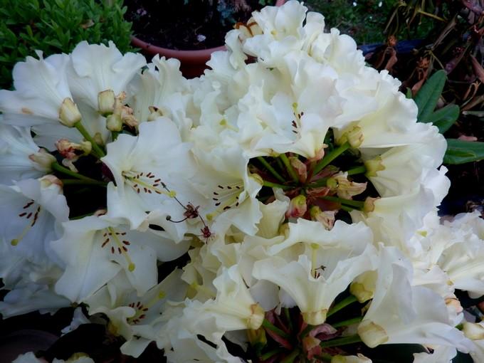 photos fleurs de marie (album 2) P1030917