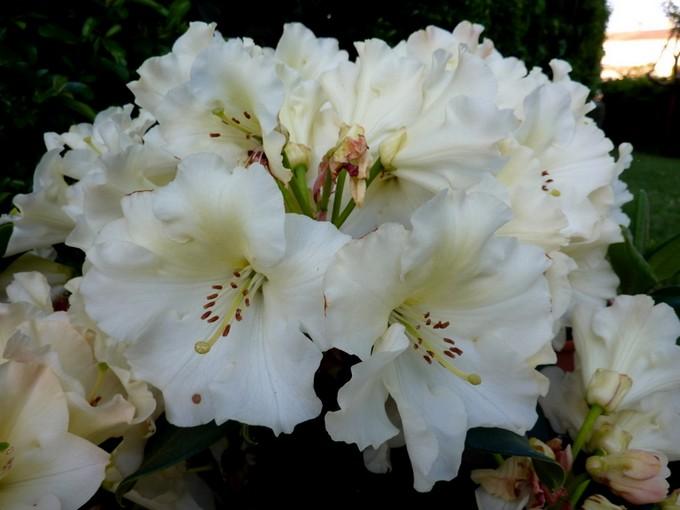 photos fleurs de marie (album 2) P1030918