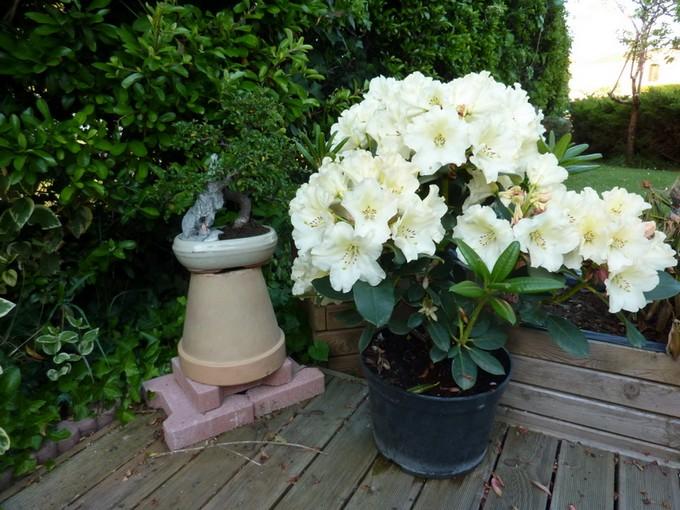 photos fleurs de marie (album 2) P1030920