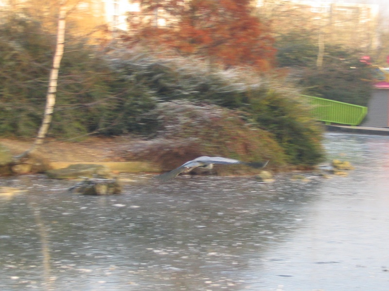 Le Heron du parc photo du jour Parc_d12