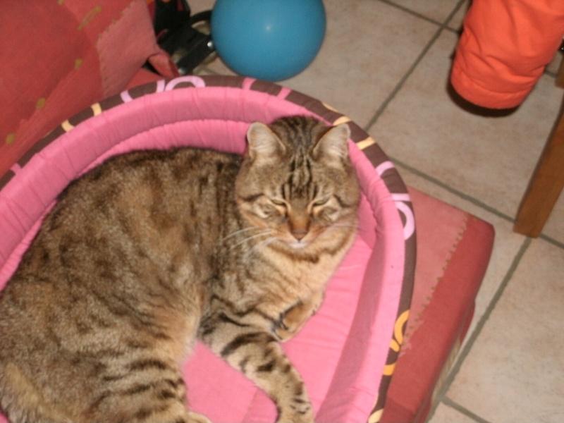 Perdu Potiron, chat tigré gris/Blagnac août 2010 Divers10