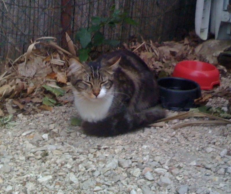 Trouvé à Colomiers, chat tigré et blanc Iphone10