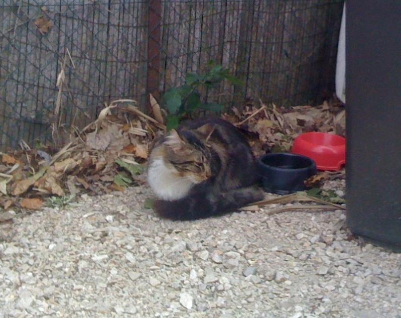 Trouvé à Colomiers, chat tigré et blanc Iphone11
