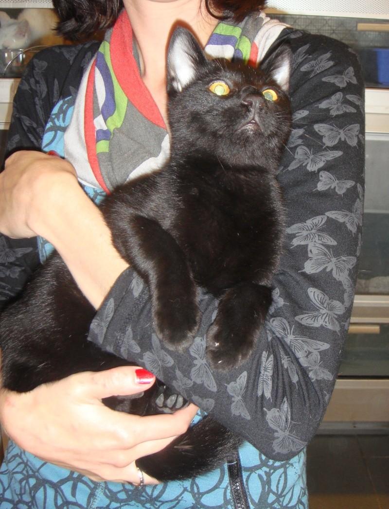 Trouvé, jeune chat noir, Colomiers Trouve12