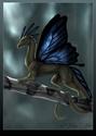 Les animaux de compagnies Dragon10