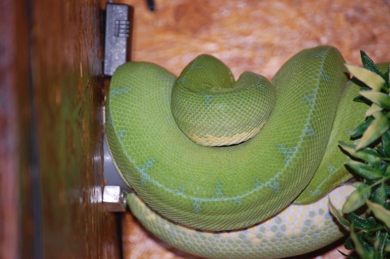 viridis Dsc_0033